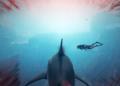 Maneater je žraločí RPG v otevřených vodách Maneater 05