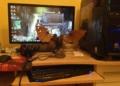 Bioshock: Infinite 7730