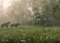 Zahraniční dojmy z PC verze Red Dead Redemption 2 rdr2 pc screenshot 044 1572568732325 1024x576
