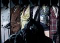 Dočkáme se hraného traileru Death Come True? DCT Ann Init Vertical scaled