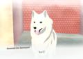 Přehled novinek z Japonska 11. týdne A Shiba Story 2021 03 16 21 014
