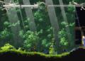 Přehled novinek z Japonska 10. týdne Record of Lodoss War Deedlit in Wonder Labyrinth 2021 03 10 21 005
