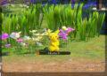 Recenze New Pokémon Snap Uvod 5